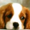 ToughPuppy
